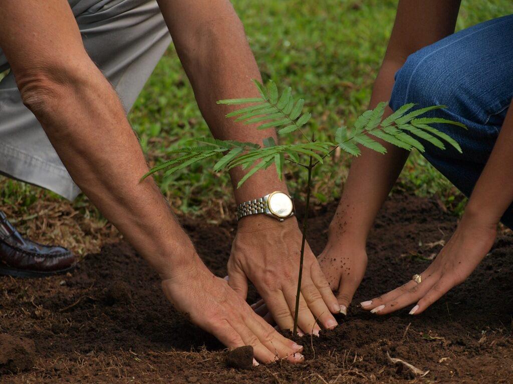 Картинка как сажают дерево 7